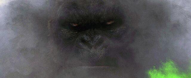File:Kong face.jpeg