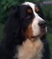 What Kind Of Dog Is Hubble In Good Boy