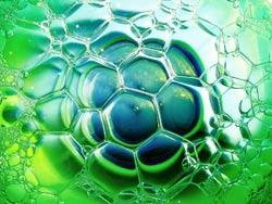 File:Algae2.jpg