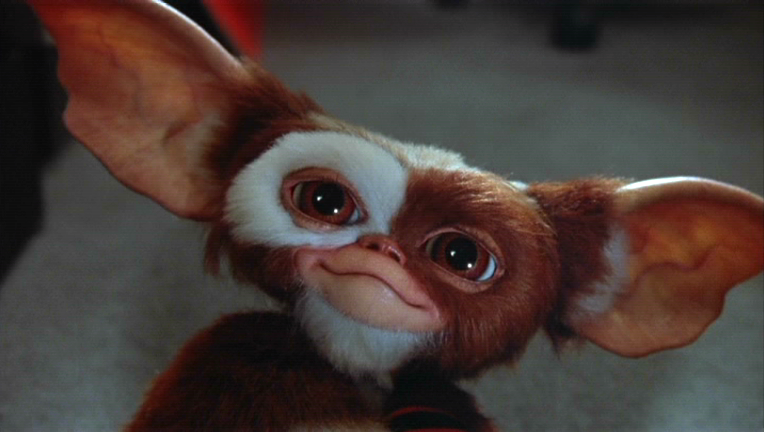 http://vignette1.wikia.nocookie.net/gremlins/images/f/fa/Gizmo.PNG/revision/latest?cb=20090920192843