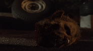421-Severed Hundjäger head
