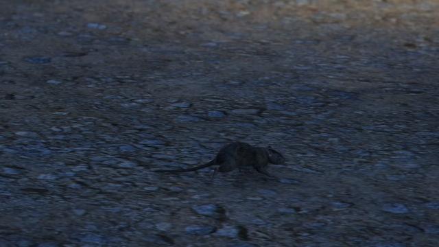 File:Rat GTAV Dignity Village.png