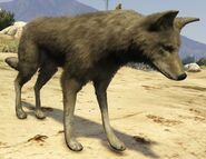 Coyote-GTAV