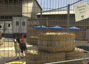 Director Mode Actors GTAVpc Animals Shepherd
