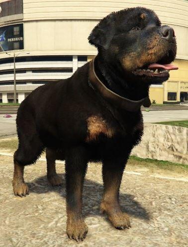 File:Rottweiler-NotChop-GTAV.jpg