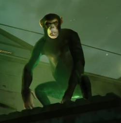Monkey-GTAV