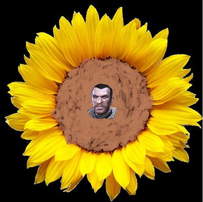 Niko Spring