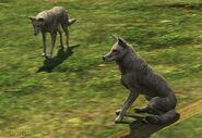 Gta5coyotes