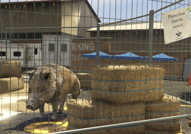 File:Director Mode Actors GTAVpc Animals Boar.png