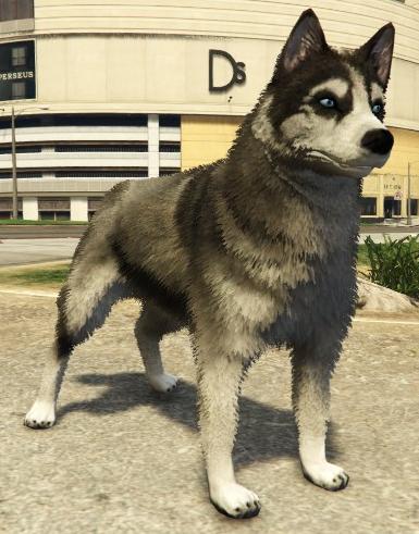 File:Husky-GTAV-PS4.png