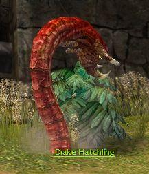 File:Red Drake Hatchling.jpg