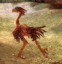 Moa Bird