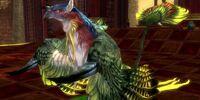 Phoenix (pet)