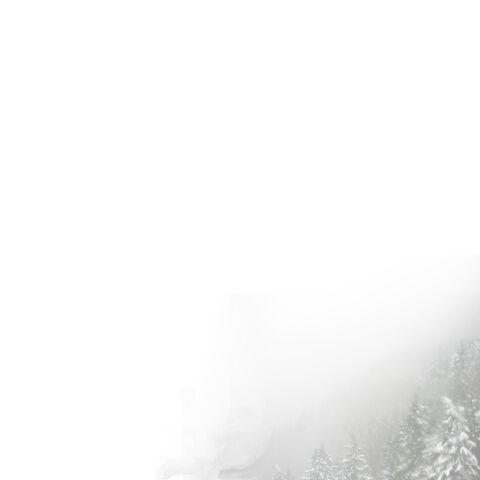 File:Snow tree-bright.jpg