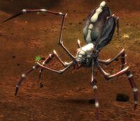 Arachni