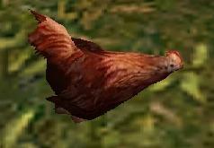 File:Hen.jpg
