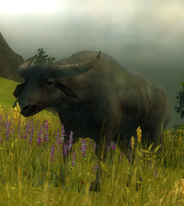 File:Water Buffalo.jpg