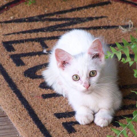 File:Welcome kitty-box.jpg