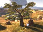 800px-Standoff Tree