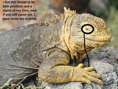 File:Lizard.jpg