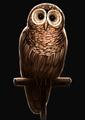 Brown Owl PM.png