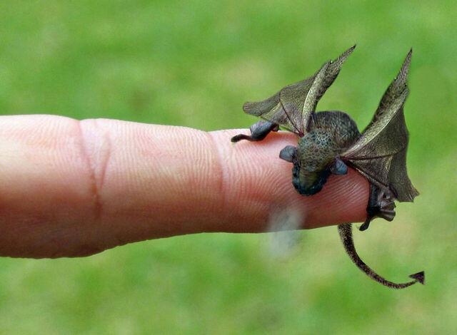 File:Little-dragon.jpg