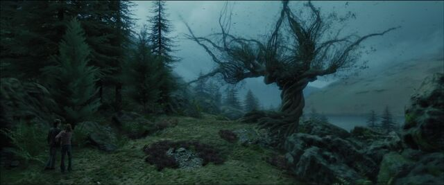 File:Whompingwillow.jpg