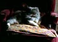 Trelawney cat 1