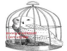 Hedwig10