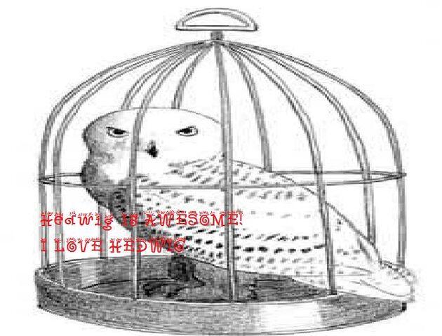 File:Hedwig10.jpg