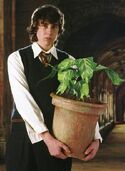 Normal promo neville plant