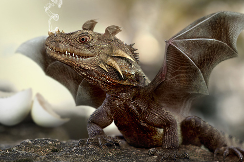File:Little dragon.jpg