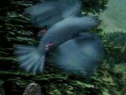 Bluebird POA 1