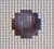 Ironleaf Seed RF1