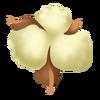 Cotton