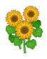 Sunflowersoftheorange