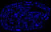 Ikutaerinaautograph21212