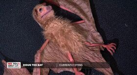 Doug the Bat