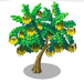 Kowhai Tree