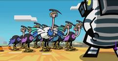 Ostrich army