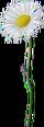 HO SecLPond Daisy-icon
