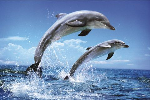 Russian Ministry of Defence article claims humans can telepathically communicate with dolphins Latest?cb=20080521014243