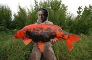 Krebswithfish