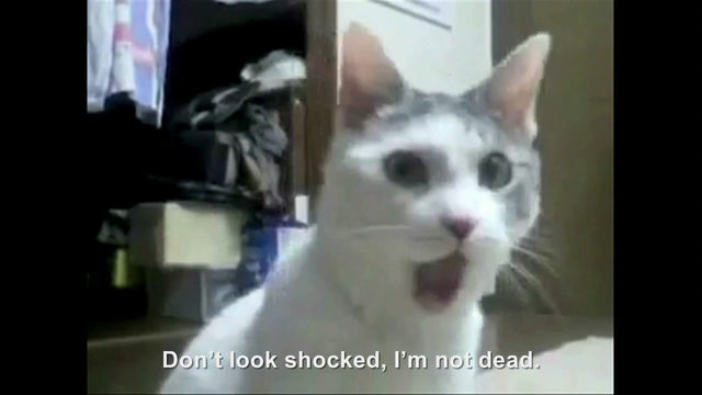 File:Hitler encounters the OMG Cat.png