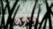 Koko (toki den)