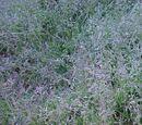 Regarnir la pelouse gratuitement