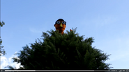 Jeff Whatnot in Tree