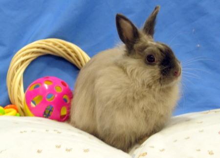 File:My Rabbit, FuFu.jpg