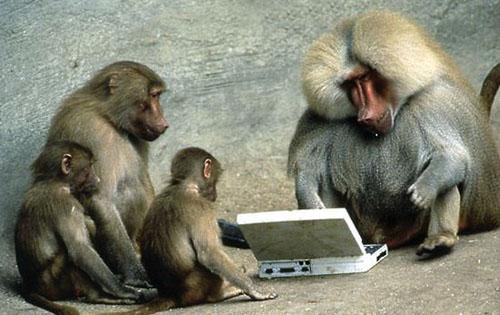 File:Funny monkey.jpg