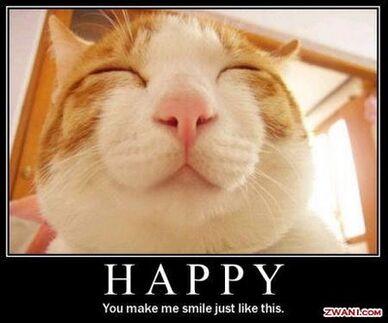 Cat Happy Smile